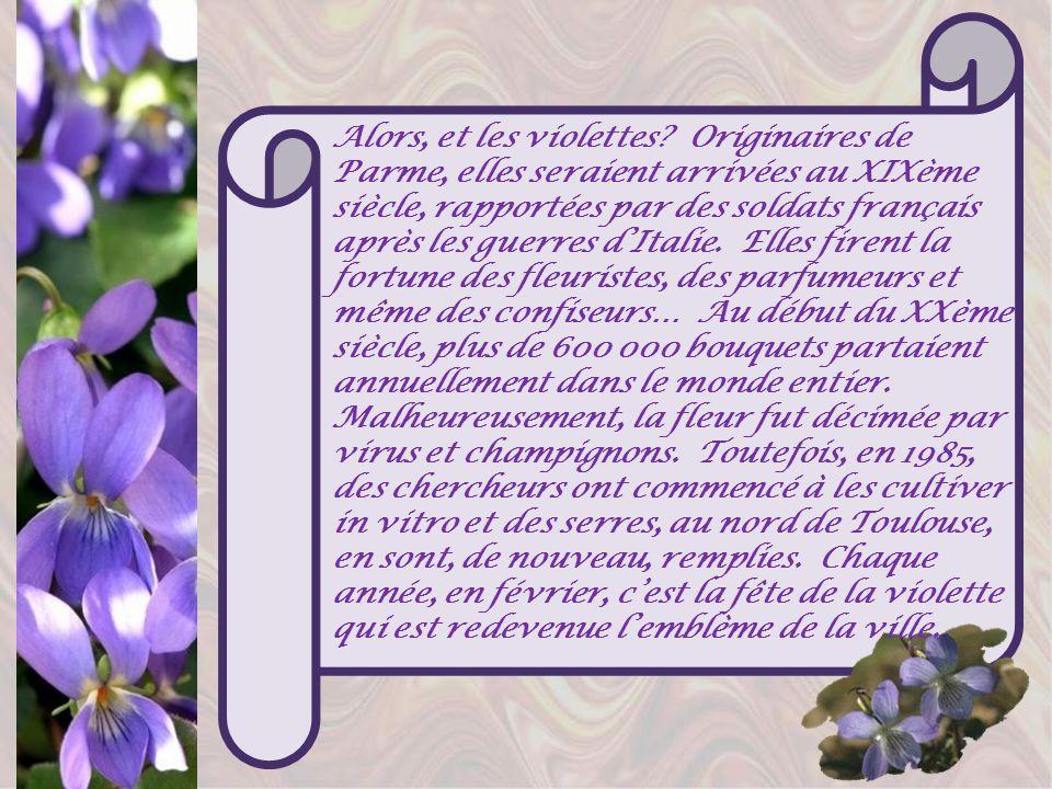 Alors, et les violettes.