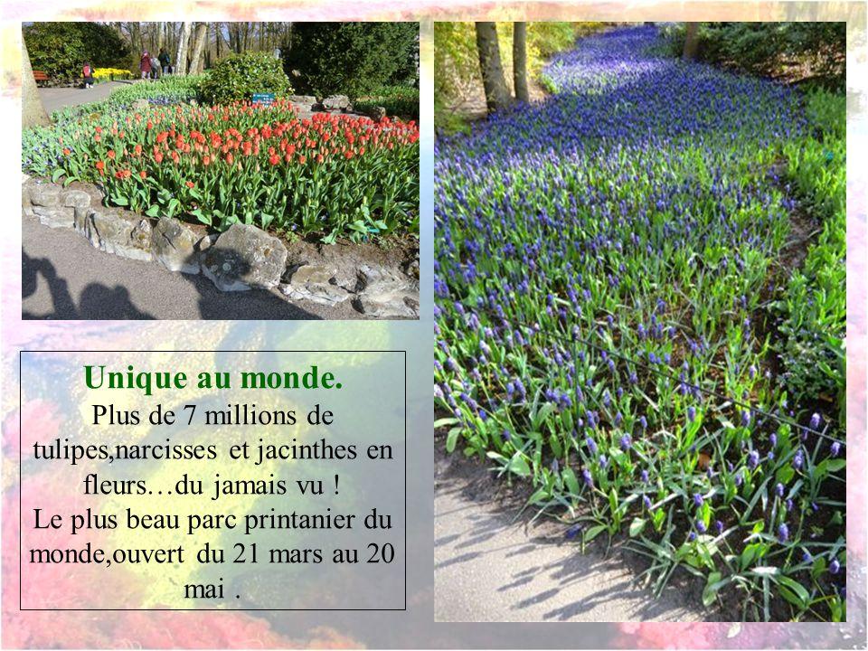 Le plus beau parc printanier du monde,ouvert du 21 mars au 20 mai .