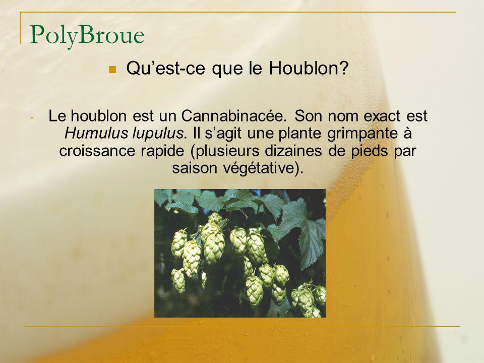 Qu'est-ce que le Houblon