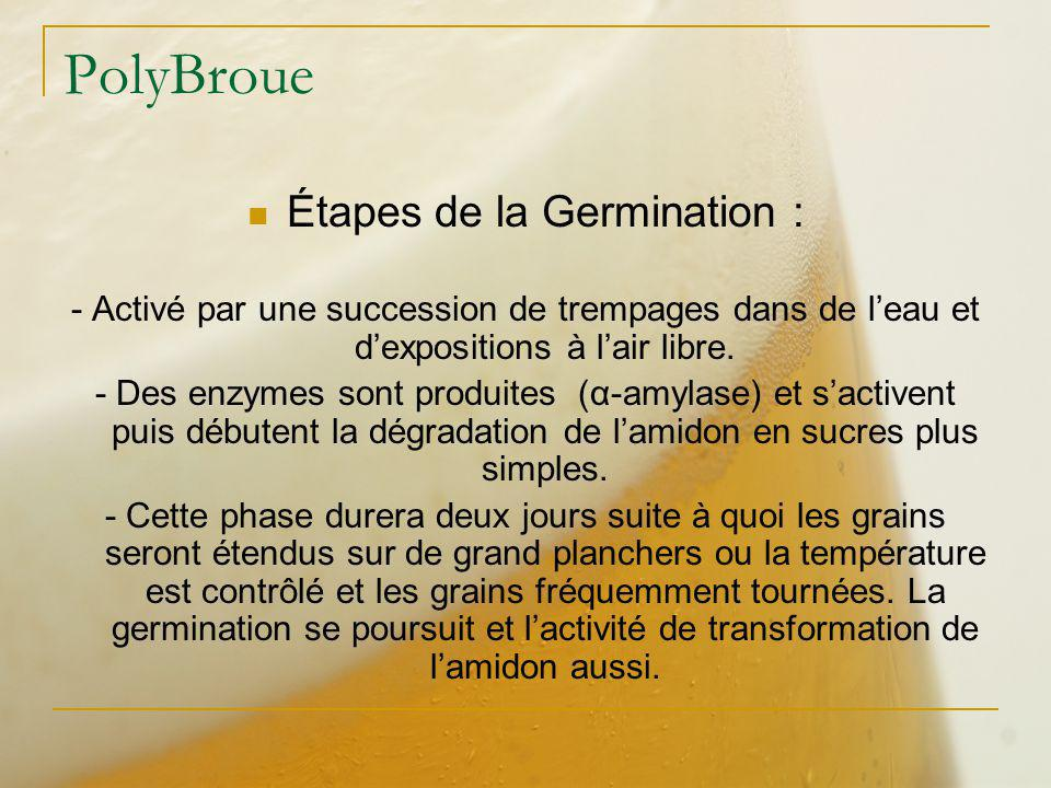 Étapes de la Germination :