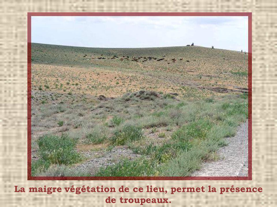 La maigre végétation de ce lieu, permet la présence de troupeaux.