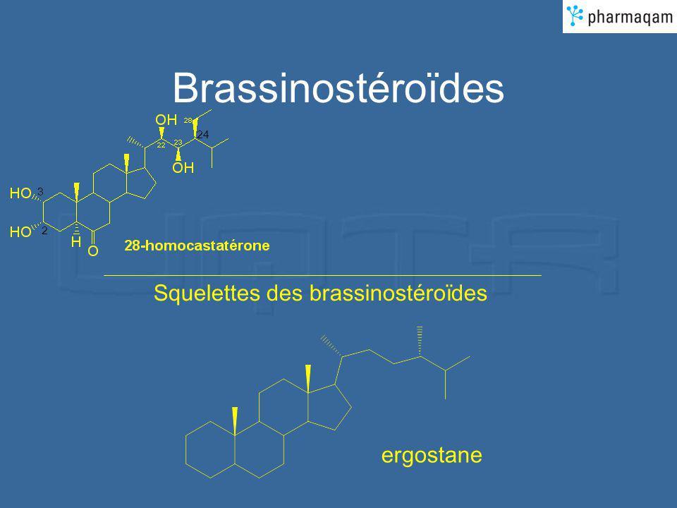 Brassinostéroïdes 24 3 2 Squelettes des brassinostéroïdes ergostane