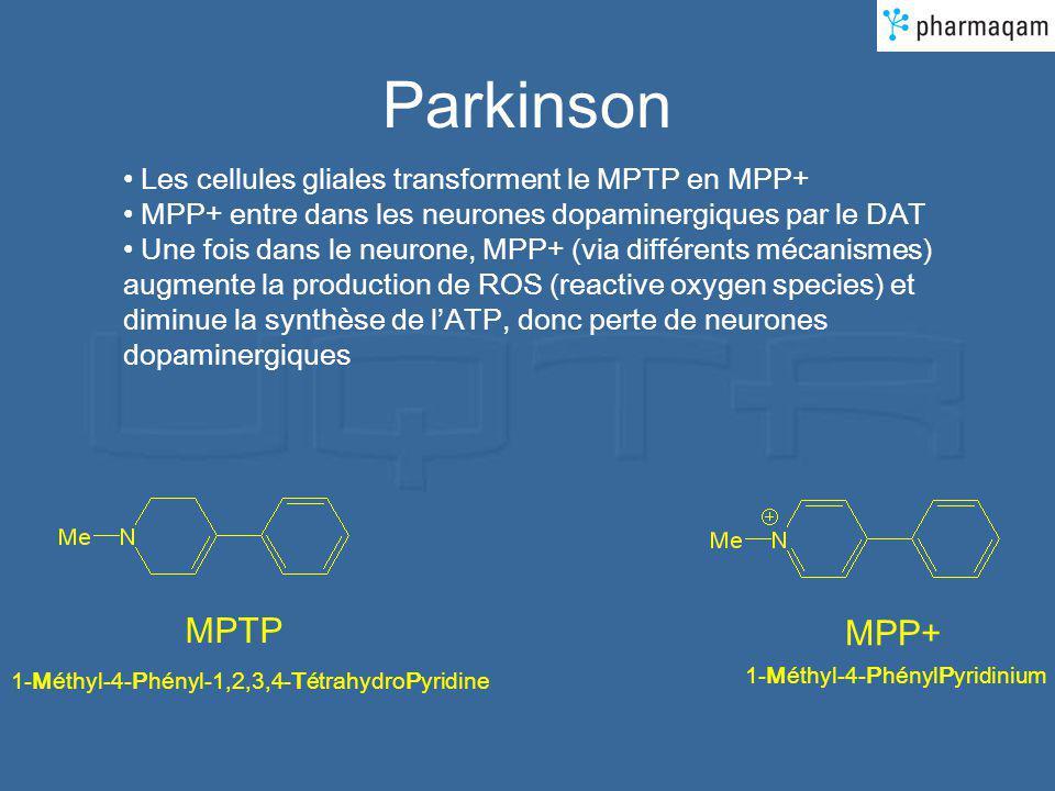 Parkinson MPTP MPP+ Les cellules gliales transforment le MPTP en MPP+