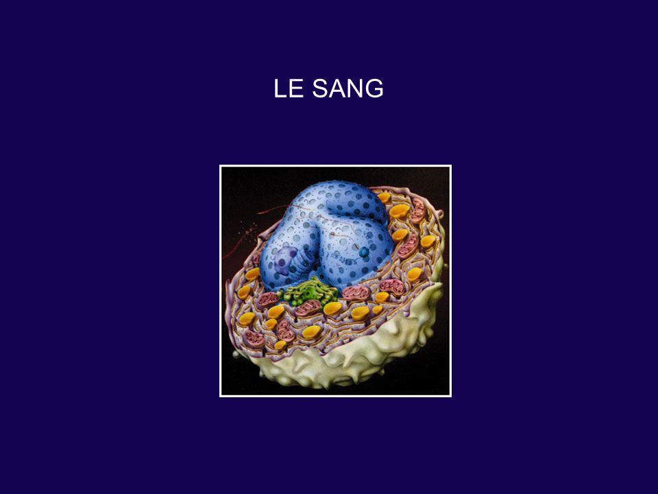 LE SANG