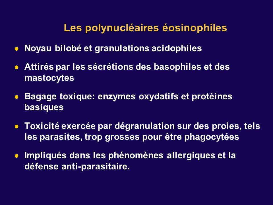Les polynucléaires éosinophiles