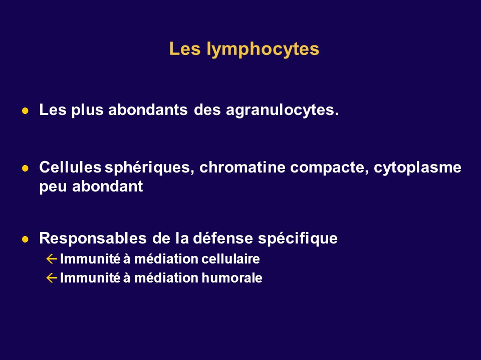 Les lymphocytes Les plus abondants des agranulocytes.