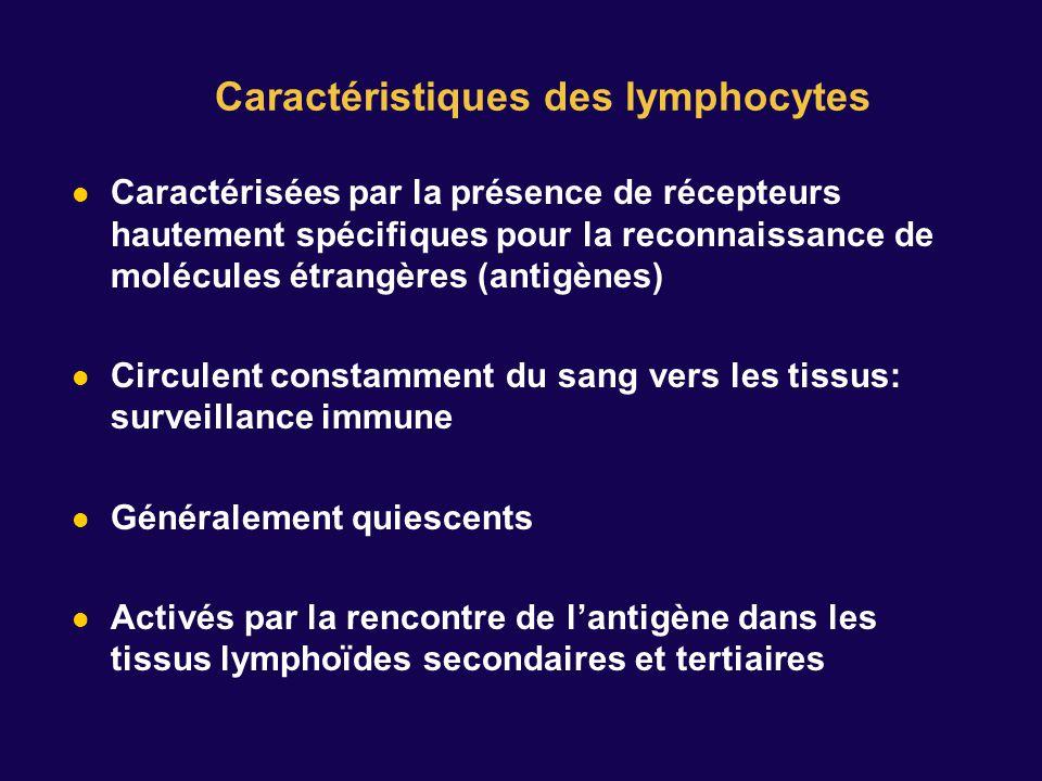 Caractéristiques des lymphocytes
