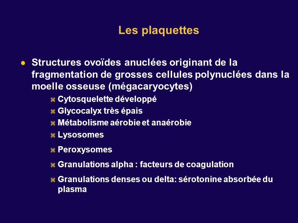 Les plaquettes Structures ovoïdes anuclées originant de la fragmentation de grosses cellules polynuclées dans la moelle osseuse (mégacaryocytes)