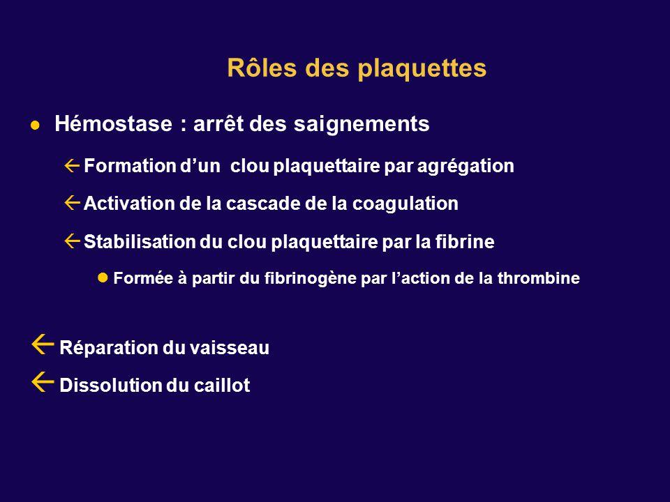 Rôles des plaquettes Hémostase : arrêt des saignements