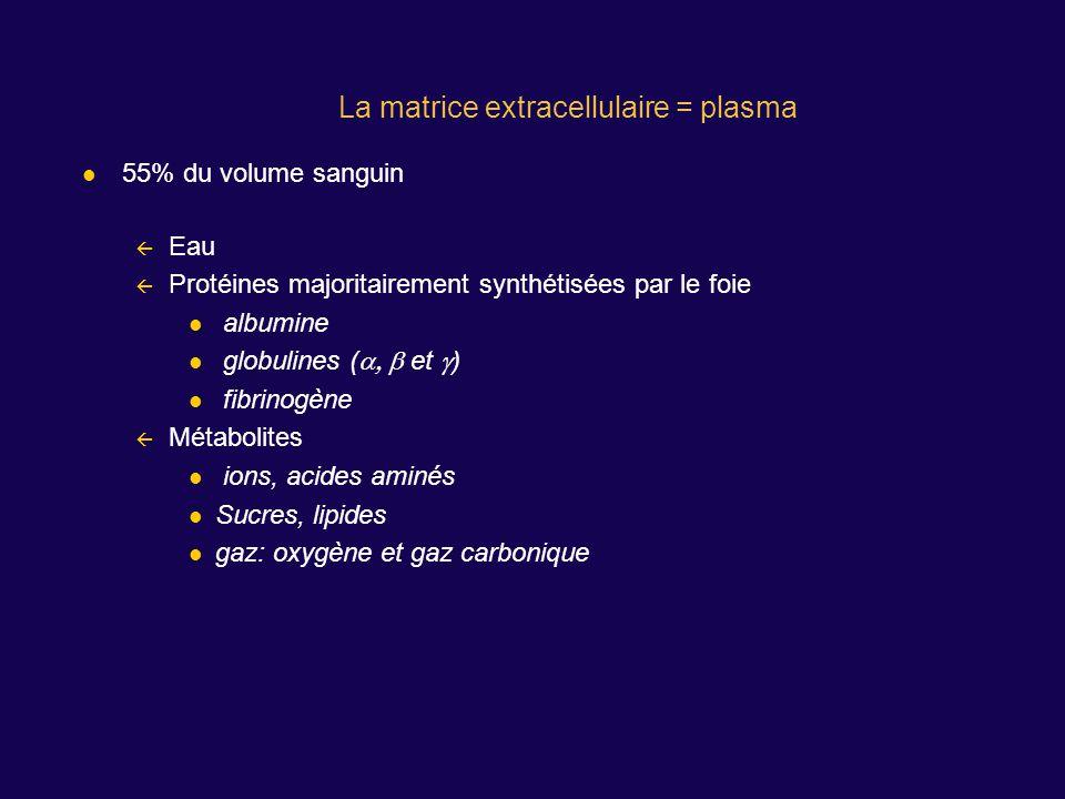 La matrice extracellulaire = plasma