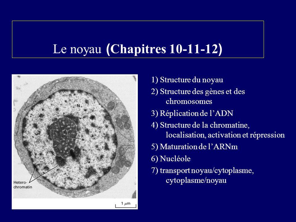 Le noyau (Chapitres 10-11-12)