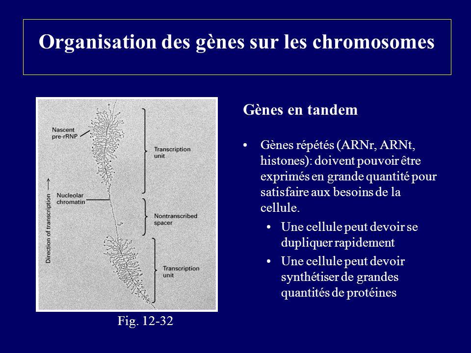 Organisation des gènes sur les chromosomes