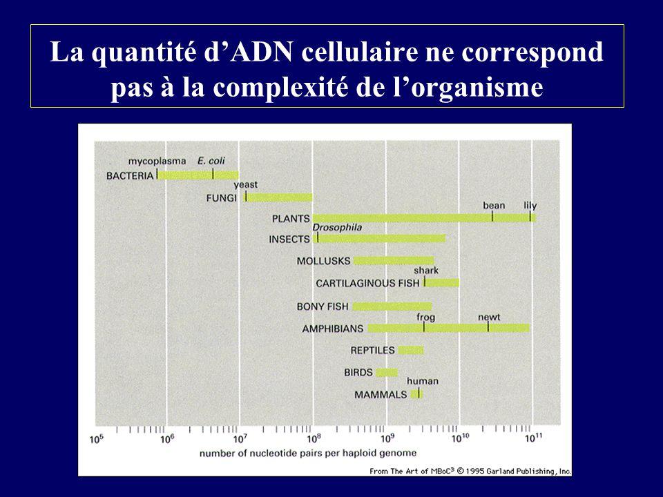 La quantité d'ADN cellulaire ne correspond pas à la complexité de l'organisme