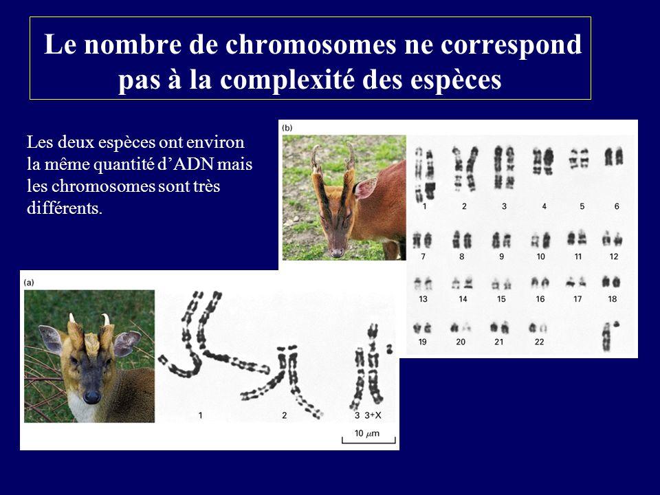 Le nombre de chromosomes ne correspond pas à la complexité des espèces