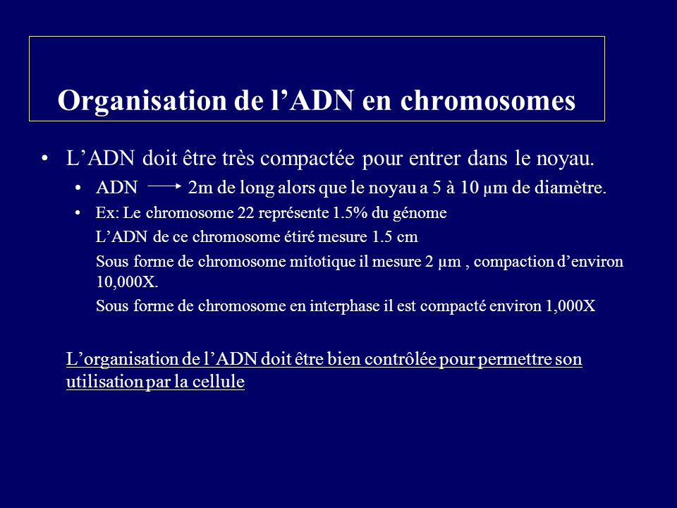 Organisation de l'ADN en chromosomes