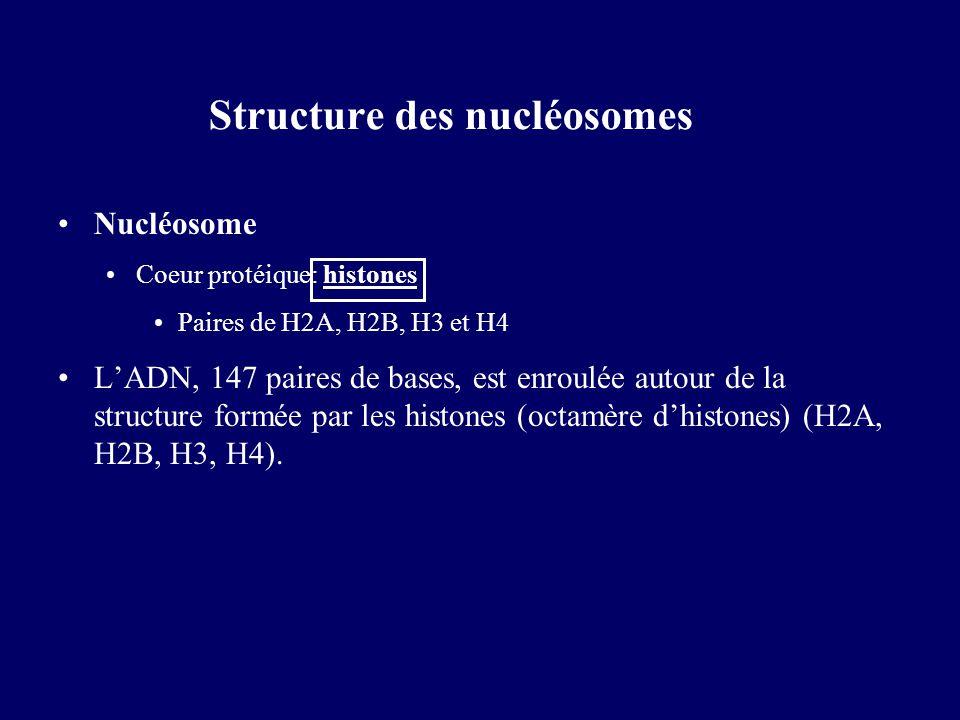 Structure des nucléosomes