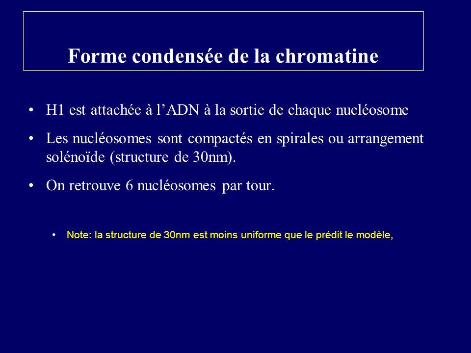 Forme condensée de la chromatine