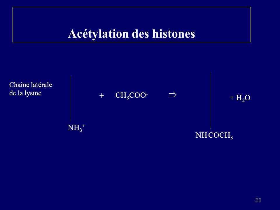 Acétylation des histones