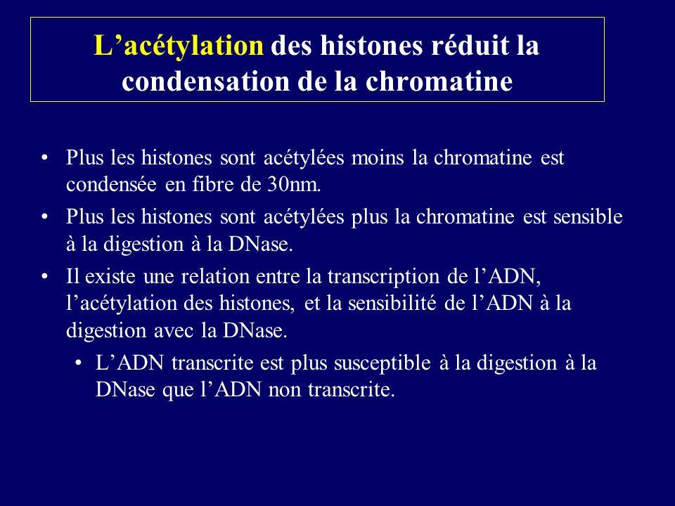 L'acétylation des histones réduit la condensation de la chromatine