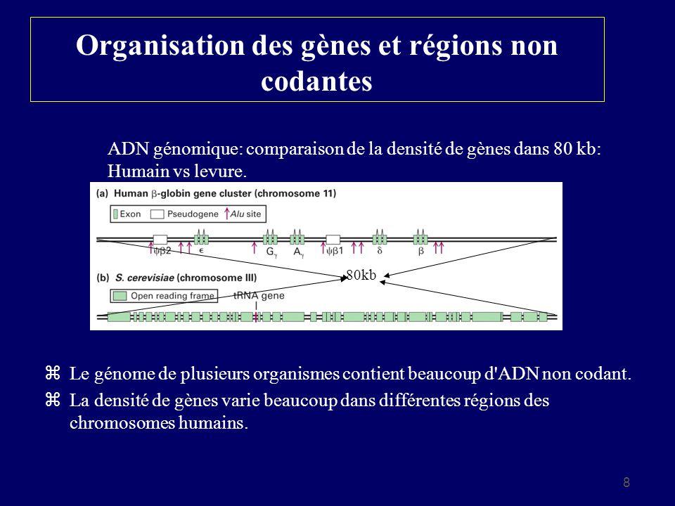Organisation des gènes et régions non codantes