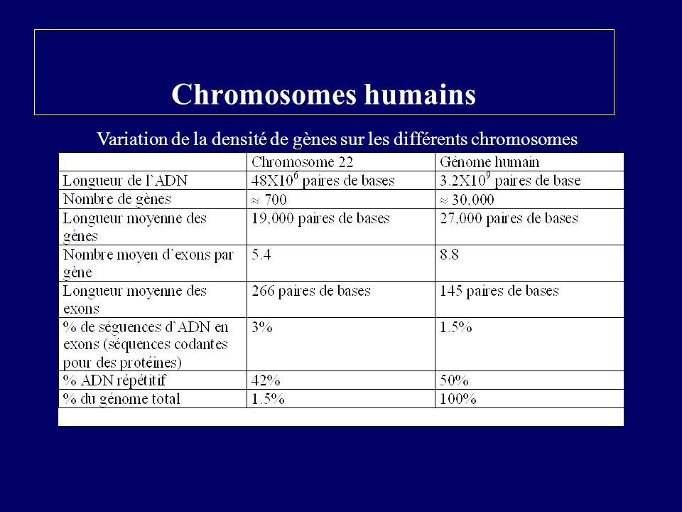 Chromosomes humains Variation de la densité de gènes sur les différents chromosomes
