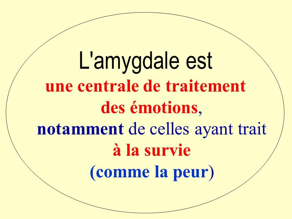 L amygdale est une centrale de traitement des émotions, notamment de celles ayant trait à la survie.