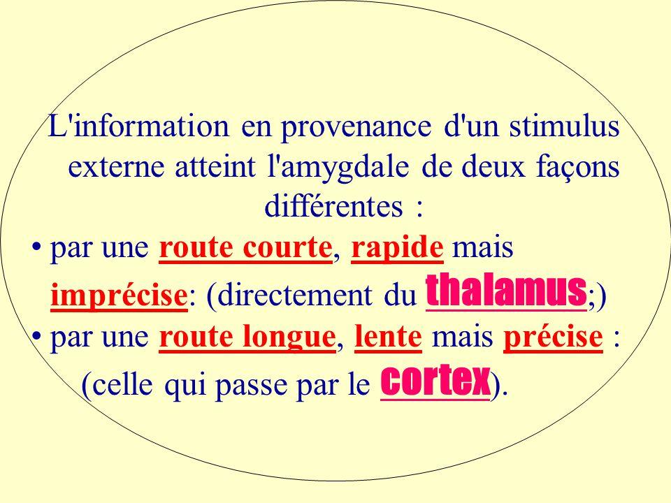 L information en provenance d un stimulus externe atteint l amygdale de deux façons différentes :