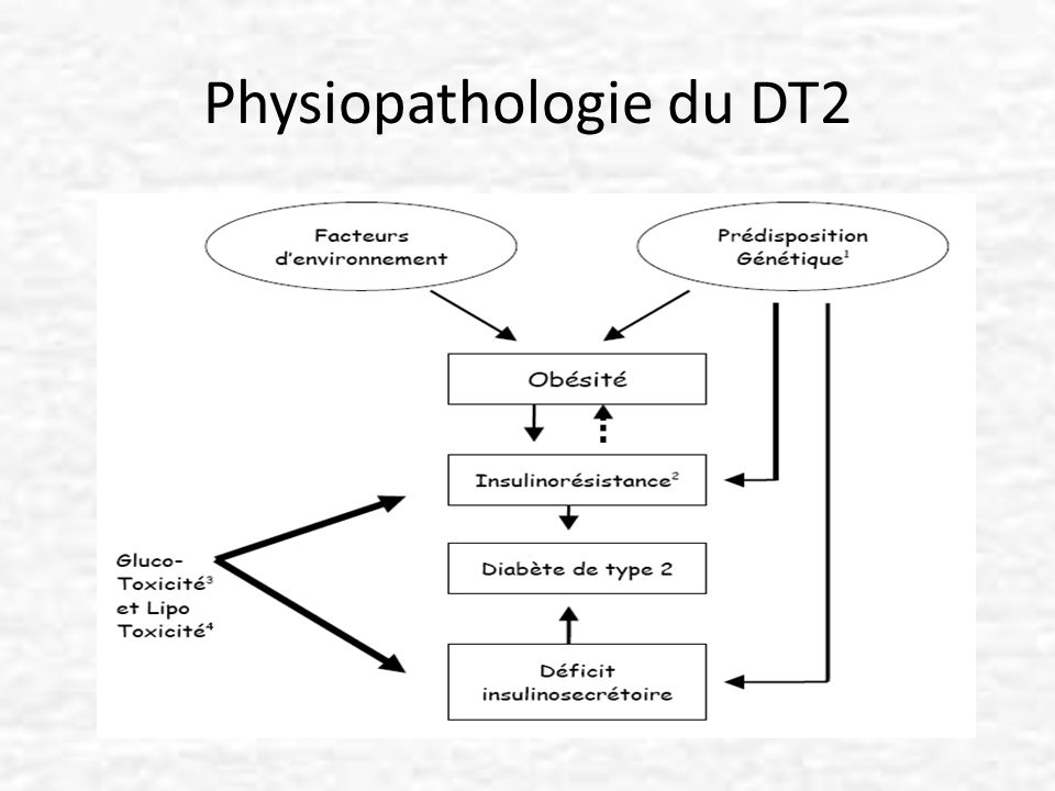 Physiopathologie du DT2