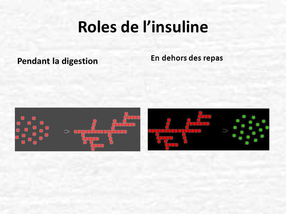 Roles de l'insuline Pendant la digestion En dehors des repas