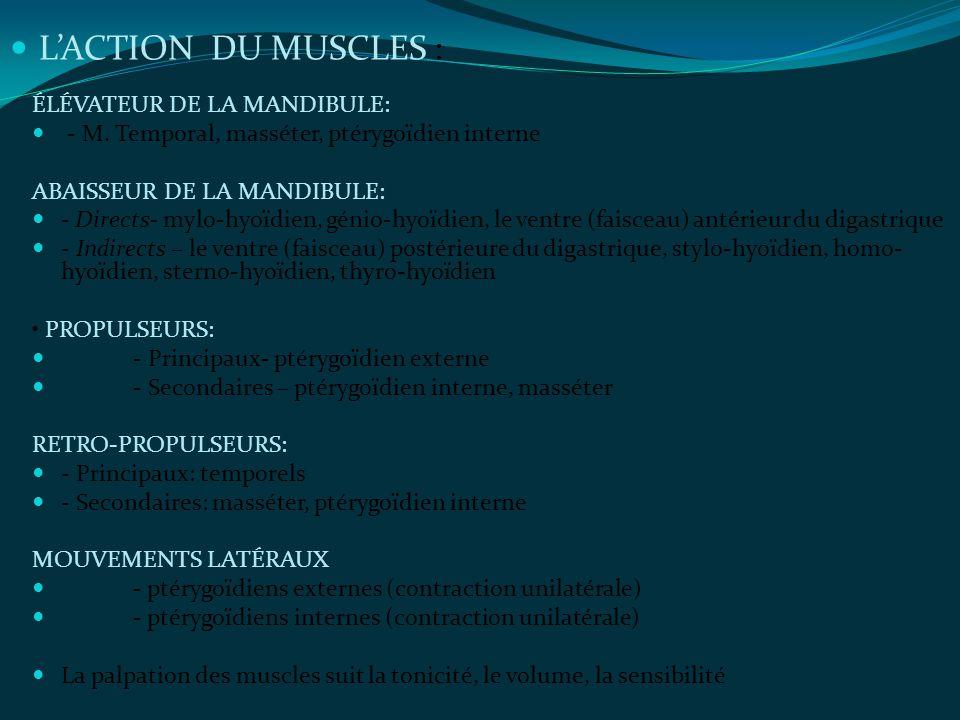 L'ACTION DU MUSCLES : ÉLÉVATEUR DE LA MANDIBULE: