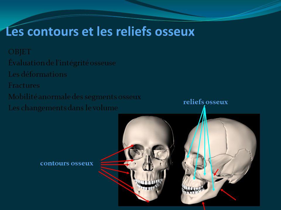 Les contours et les reliefs osseux
