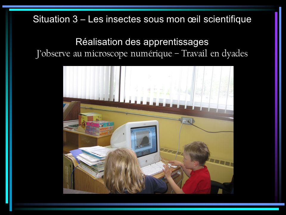 Situation 3 – Les insectes sous mon œil scientifique
