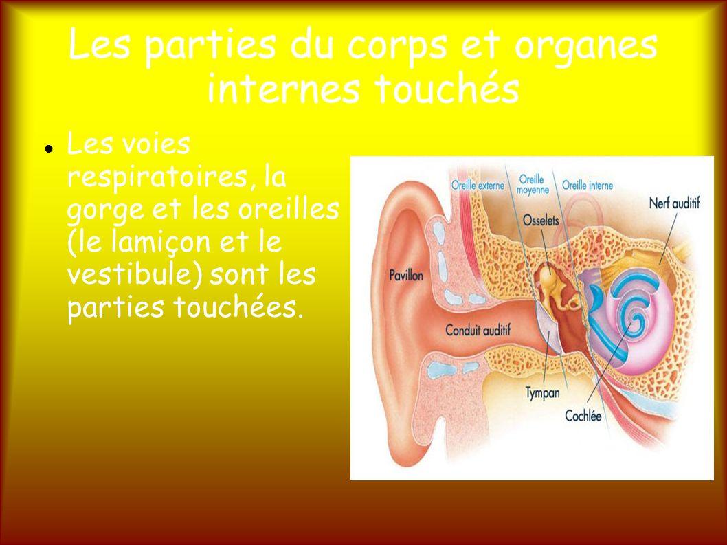 Les parties du corps et organes internes touchés
