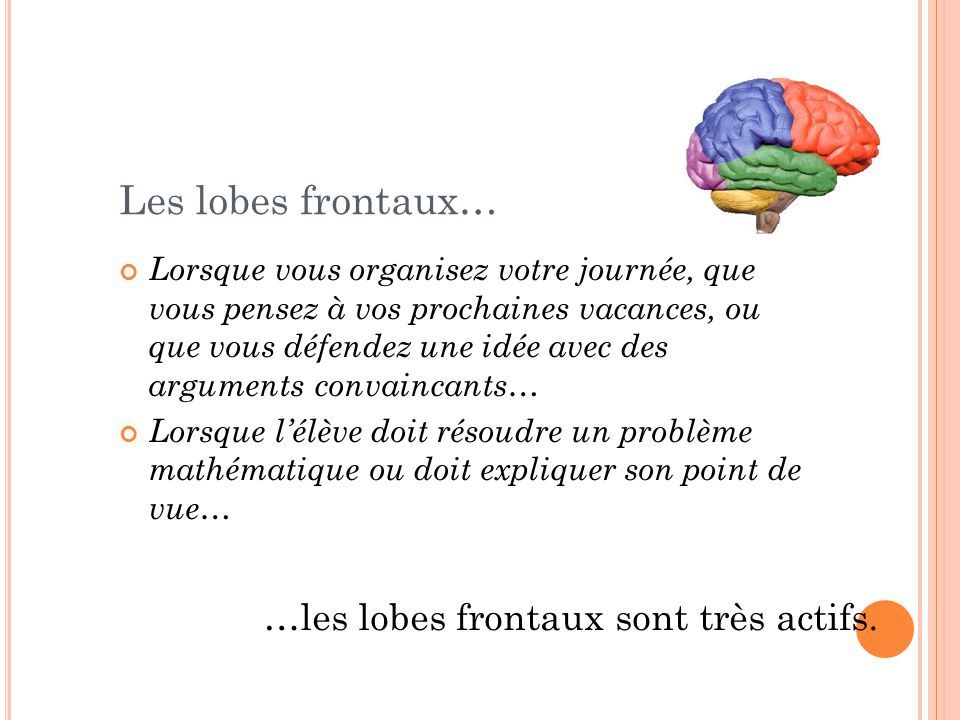 Les lobes frontaux… …les lobes frontaux sont très actifs.