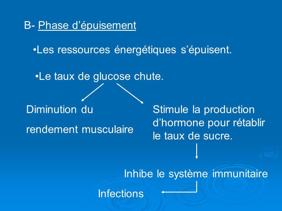 B- Phase d'épuisement Les ressources énergétiques s'épuisent. Le taux de glucose chute. Diminution du.