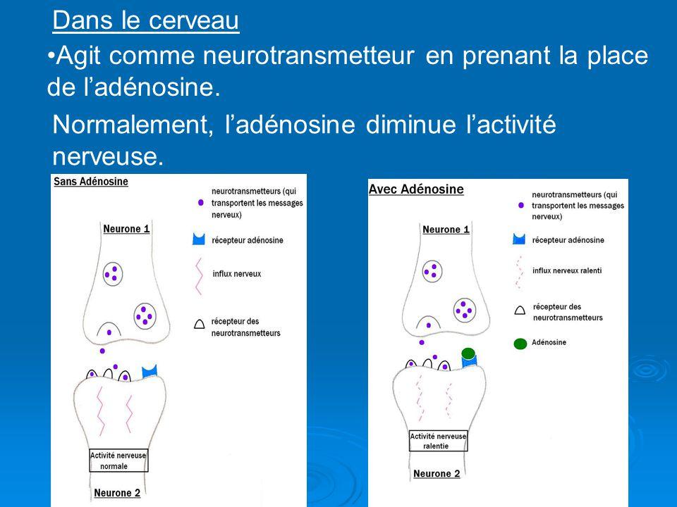 Dans le cerveau Agit comme neurotransmetteur en prenant la place de l'adénosine.