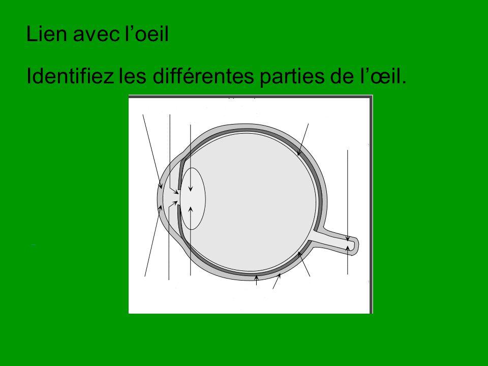 Identifiez les différentes parties de l'œil.