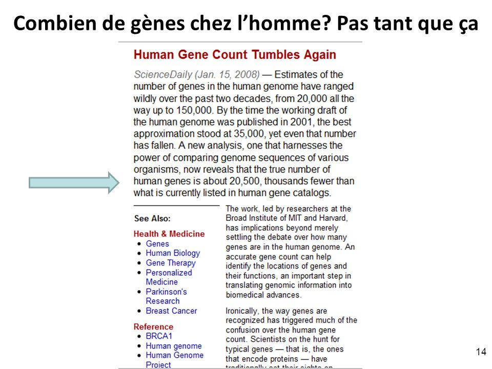 Combien de gènes chez l'homme Pas tant que ça