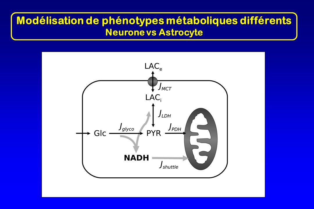 Modélisation de phénotypes métaboliques différents