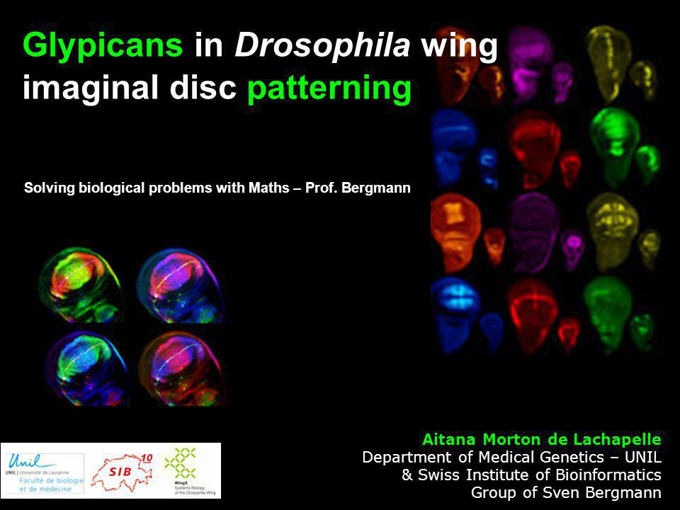 Glypicans in Drosophila wing imaginal disc patterning