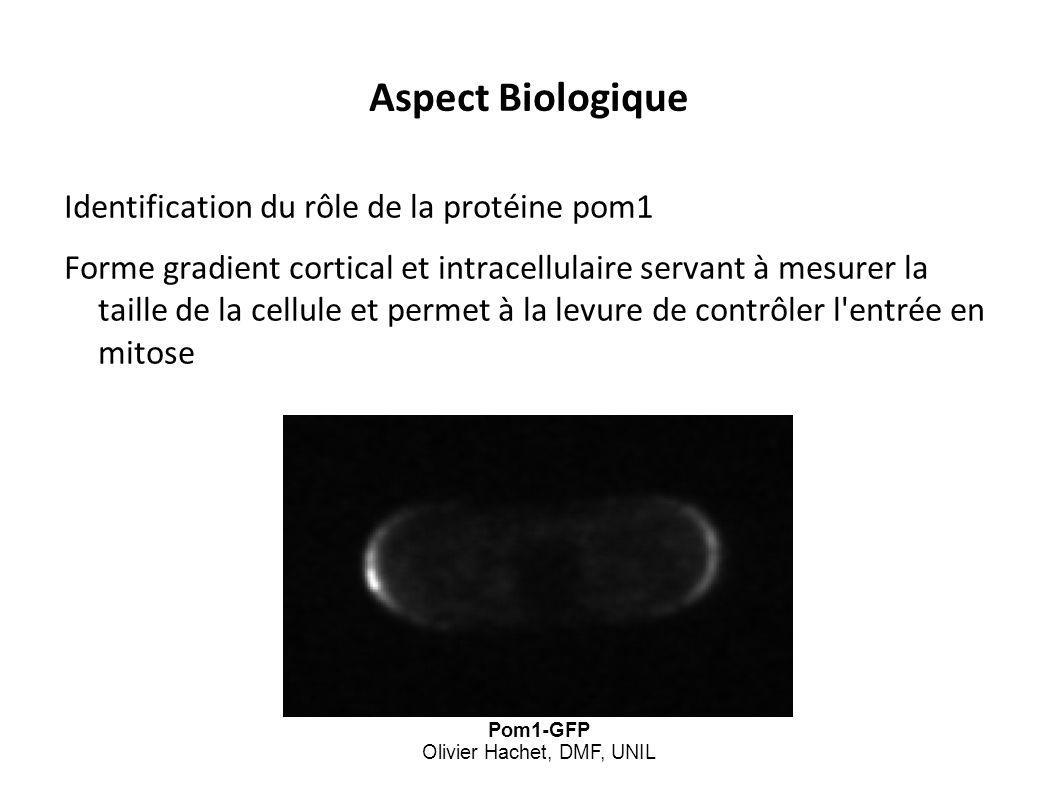 Pom1-GFP Olivier Hachet, DMF, UNIL