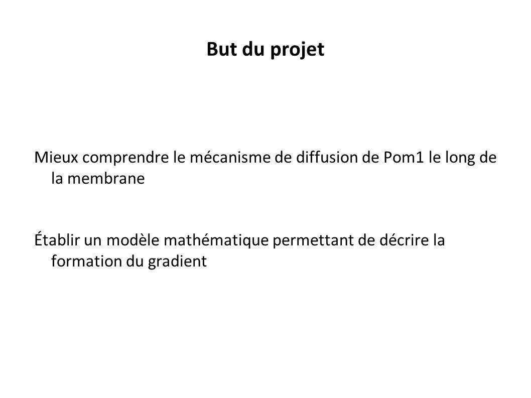 But du projet Mieux comprendre le mécanisme de diffusion de Pom1 le long de la membrane.