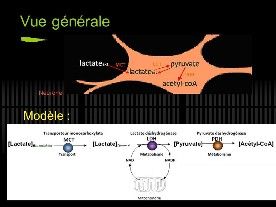 Vue générale Neurone.