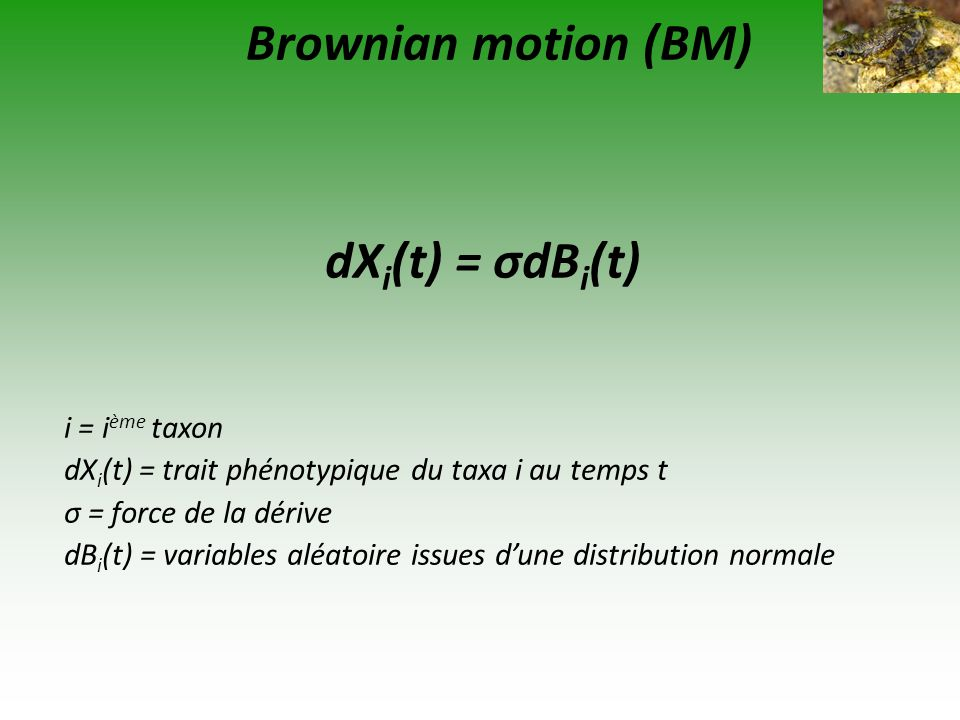 Brownian motion (BM) dXi(t) = σdBi(t) i = ième taxon