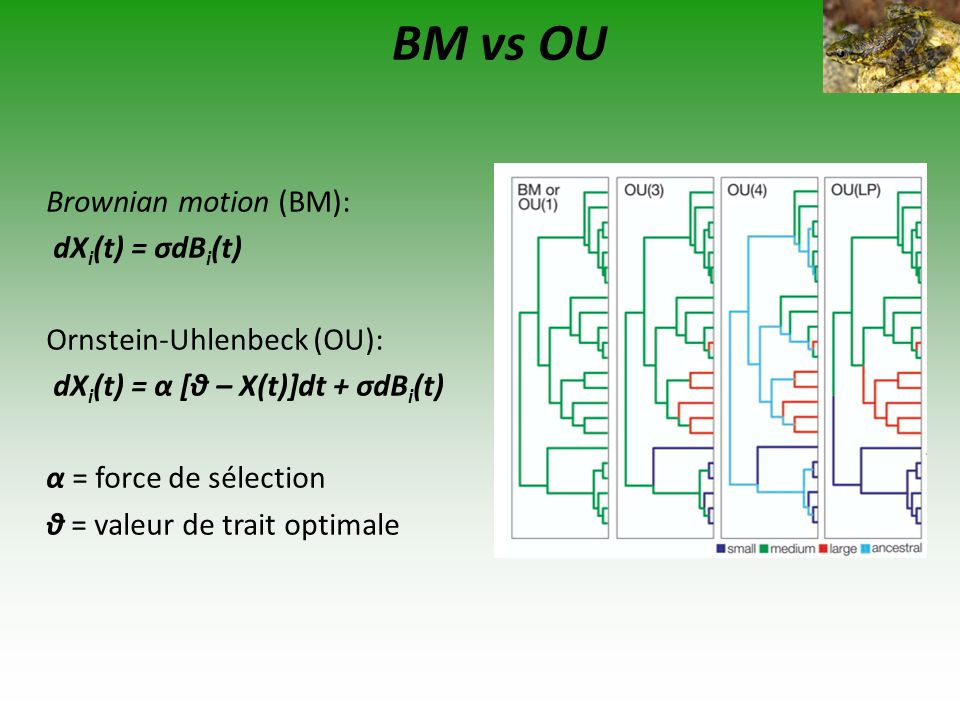 BM vs OU Brownian motion (BM): dXi(t) = σdBi(t)
