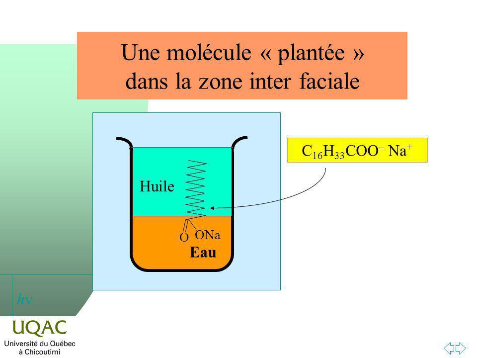Une molécule « plantée » dans la zone inter faciale