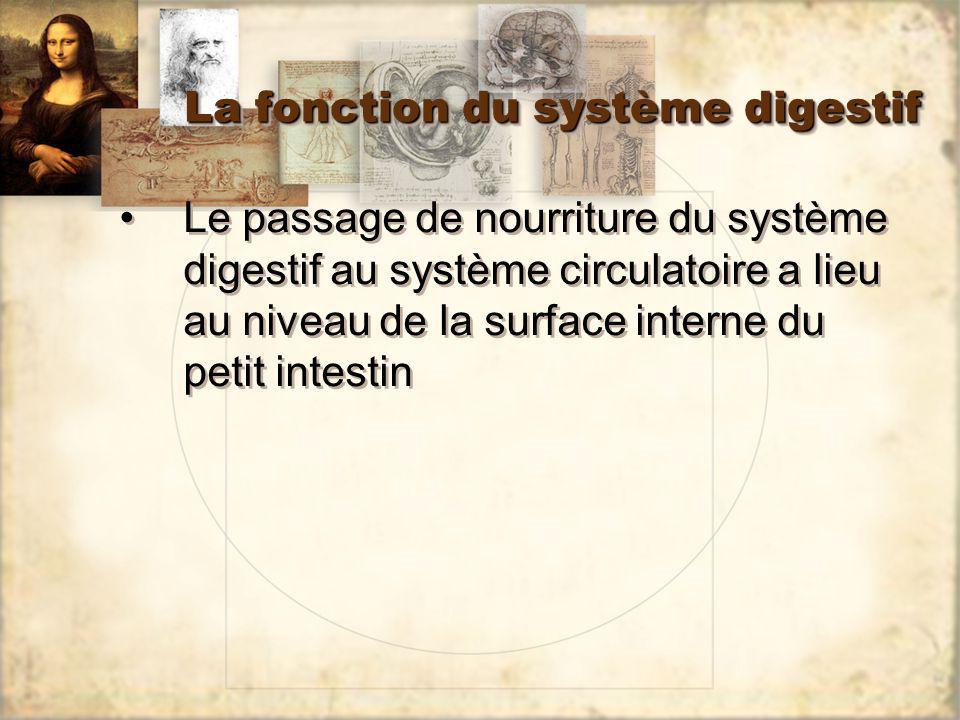 La fonction du système digestif