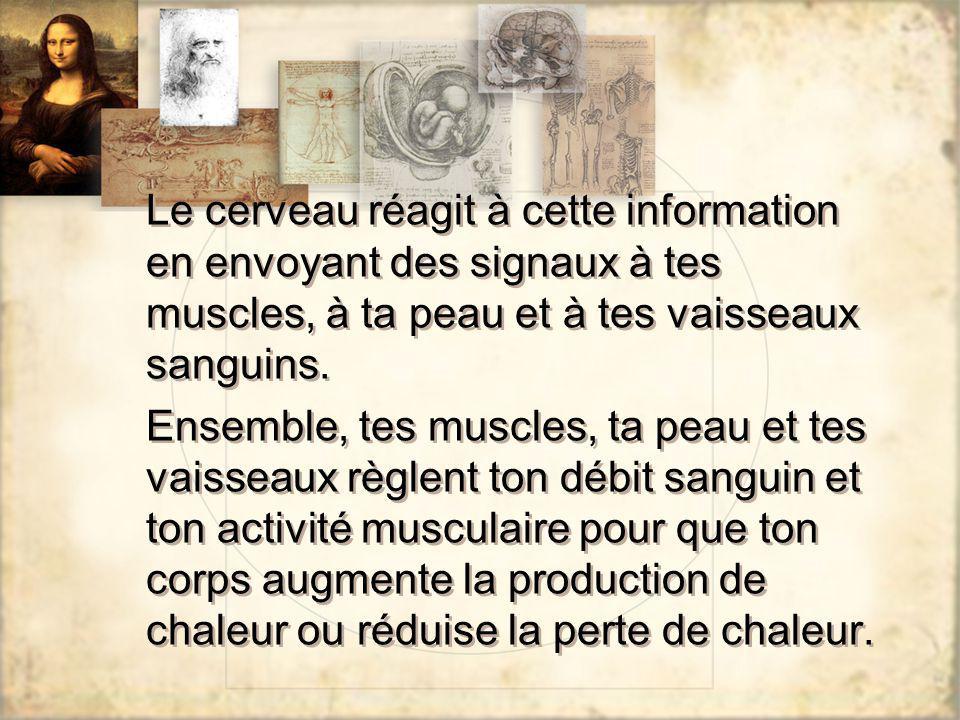 Le cerveau réagit à cette information en envoyant des signaux à tes muscles, à ta peau et à tes vaisseaux sanguins.
