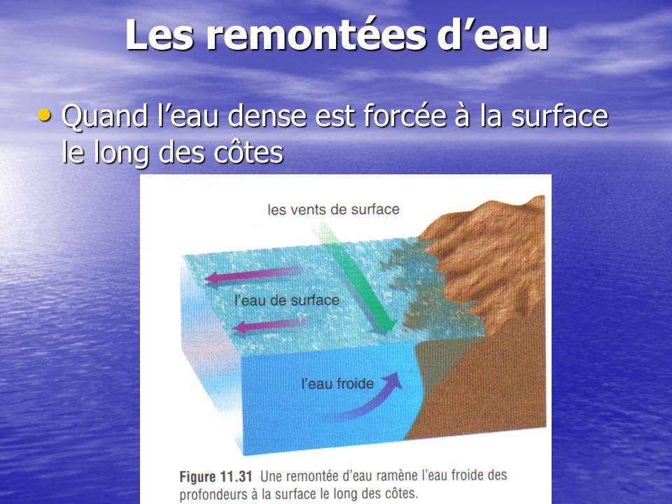 Les remontées d'eau Quand l'eau dense est forcée à la surface le long des côtes