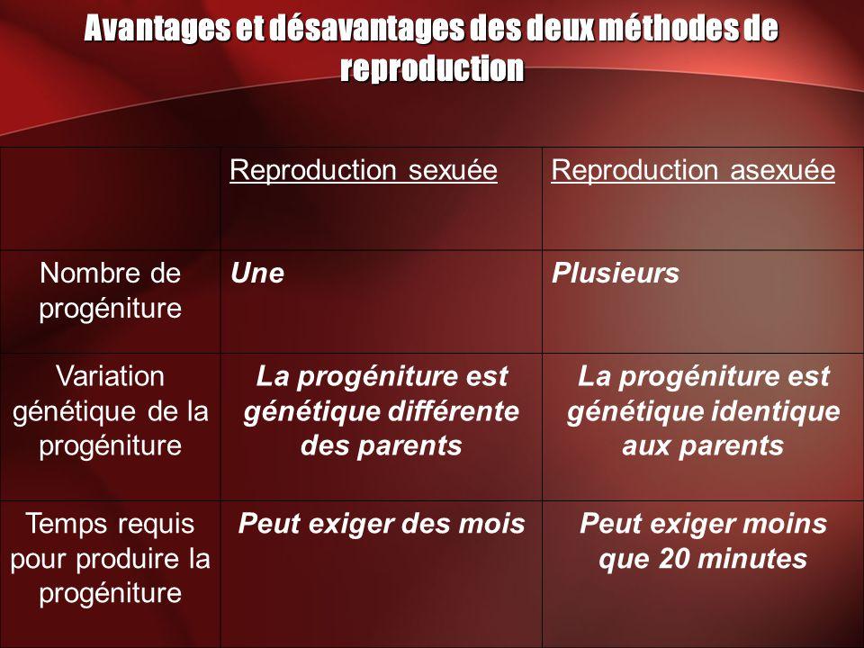 Avantages et désavantages des deux méthodes de reproduction